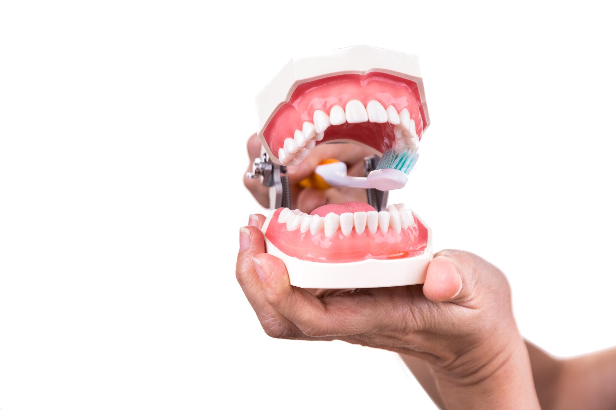 Dentista monstrando dentadura Periodoncia